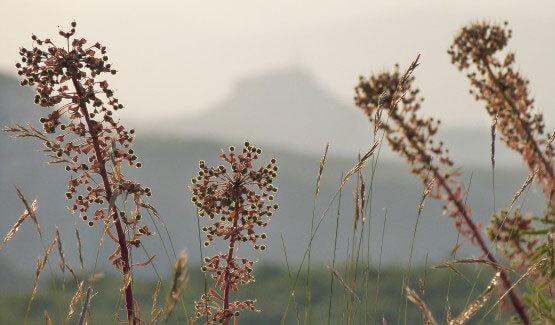 Nature Ardèche
